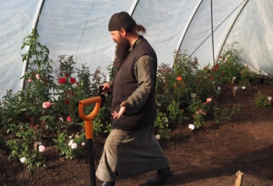 Лилии и розы начали выращивать на Валааме в Карелии