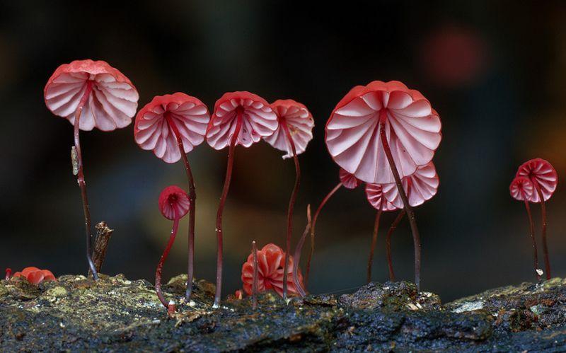 Удивительный мир грибов от Стива Эксфорда