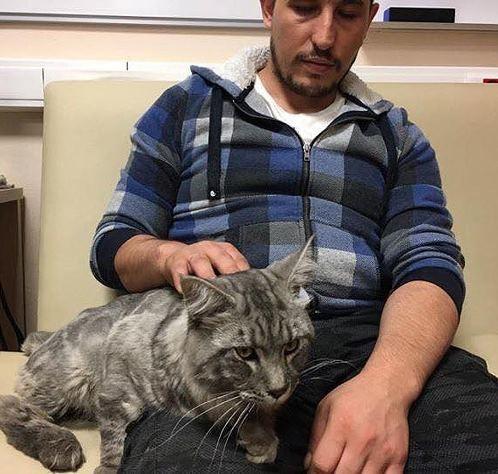 Сотрудники дорожного патруля спасли четырехмесячного котенка на Третьем Транспортном кольце дорожный патруль, мейн-кун, спасение кота