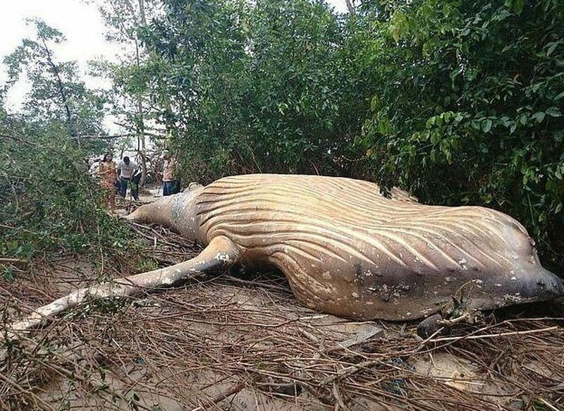Природа подкинула загадку: 10-метровый кит обнаружен в амазонских джунглях