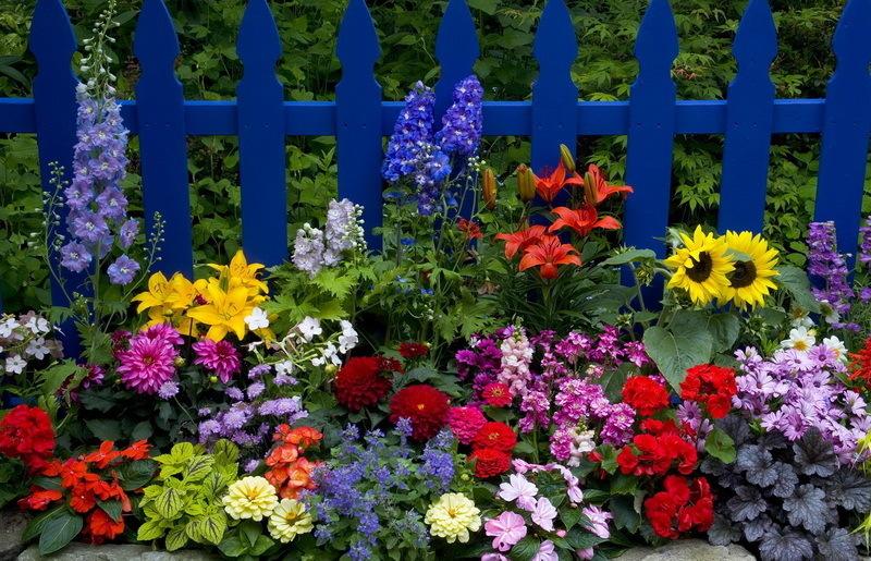 Как быстро добавить красок в сад!