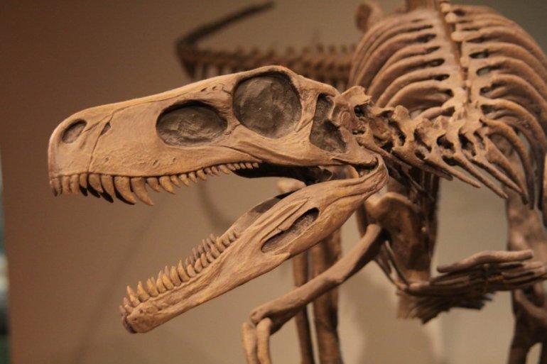 Ученые оживили древнейшую ящерицу, которой 290 миллионов лет