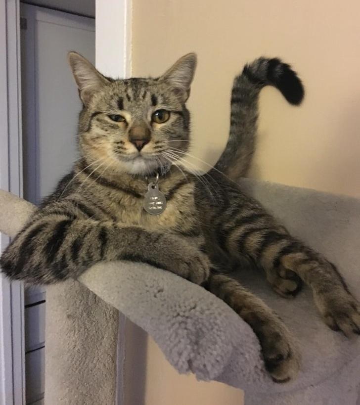 Коты с сокрушительной харизм…