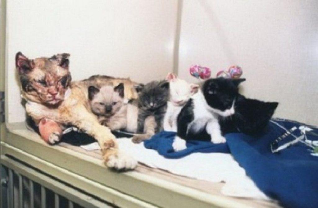 Мама-кошка 5 раз возвращалась в горящий дом, чтобы вынести всех своих котят…