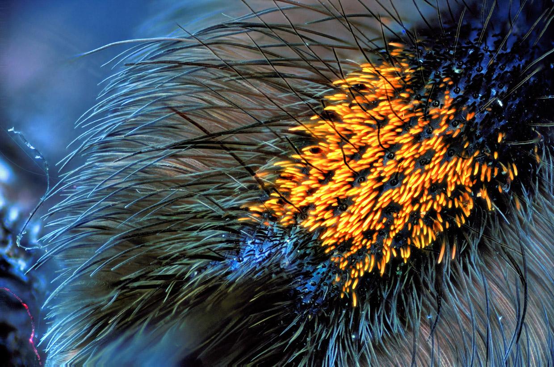 Макрофотографии паучьих лап