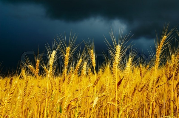 Кпадению доходов россиян добавился спад всельском хозяйстве