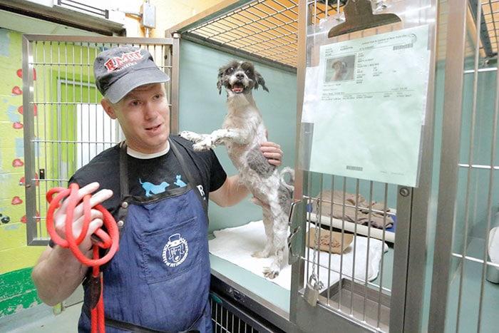 Надо помочь «старичкам»! Мужчина бесплатно стрижет пожилых собак, чтобы помочь им найти дом!