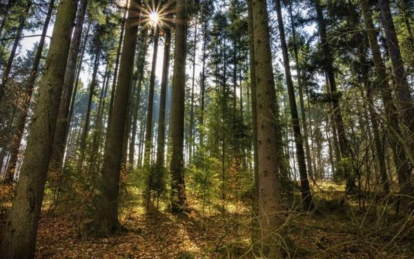 Красноярские леса защитят за…