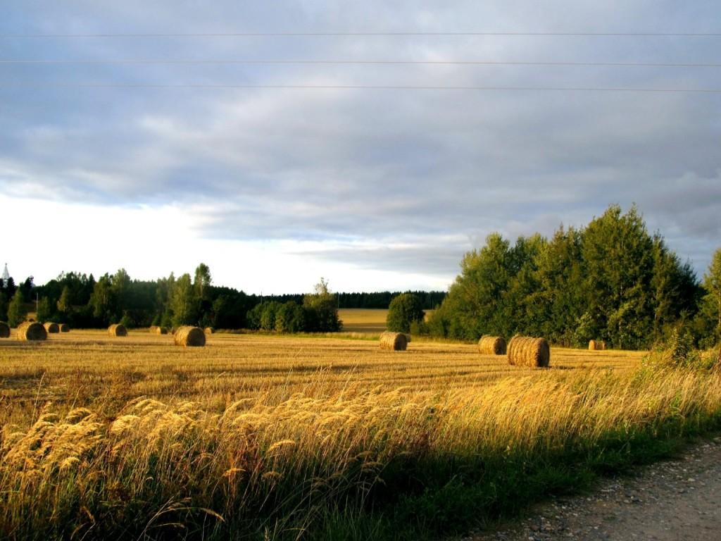 Сельские пейзажи.