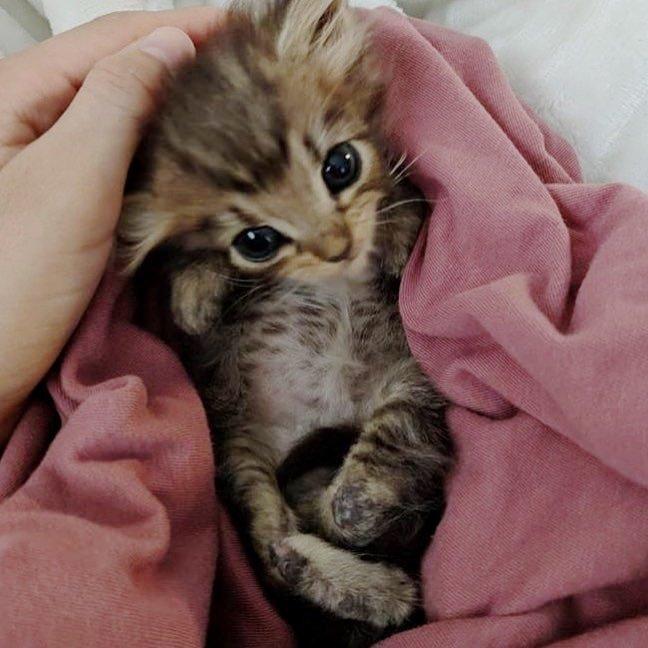 Котенка с вывернутыми задним…