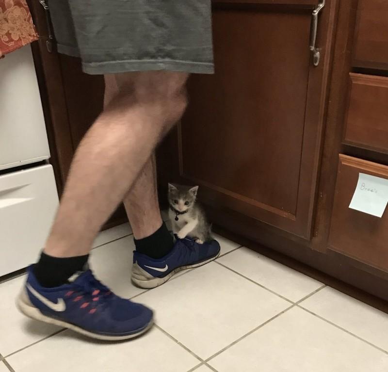 Мама-кошка оставила его на сильной жаре и больше не вернулась