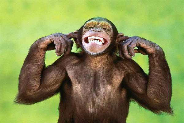 Человек произошёл от обезьян…
