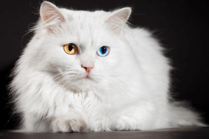 Загадочное исчезновение кота