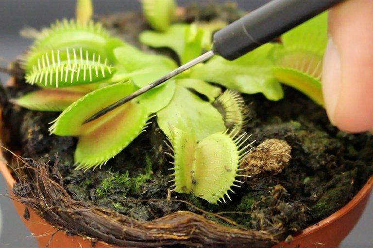 У растений обнаружилось «сознание»