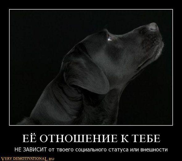 собаки, демотиваторы