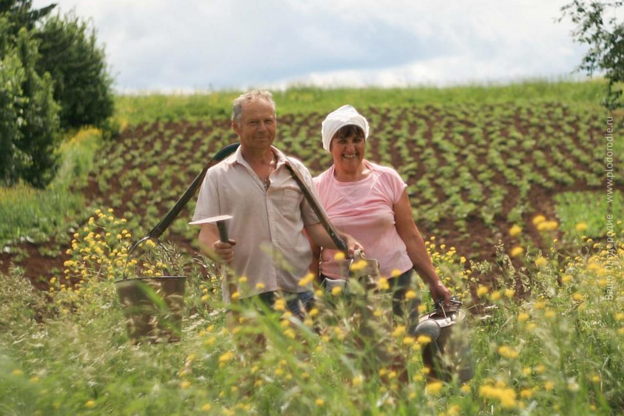 Три года природного земледелия. Площадь под картофель уменьшилась раза в четыре, а урожай тот же