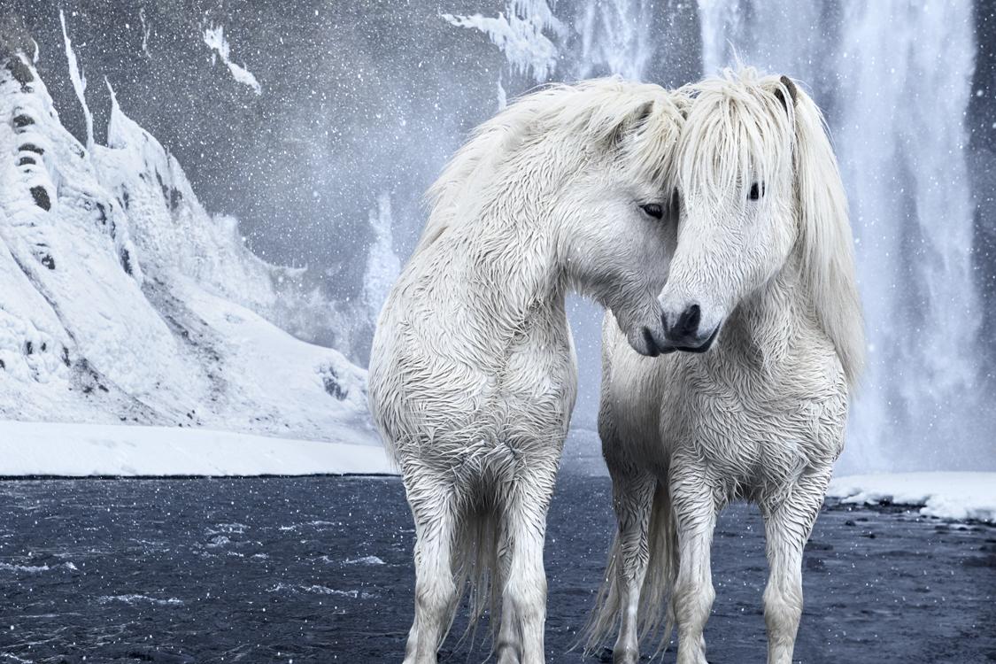 Фотограф заснял лошадей, кот…