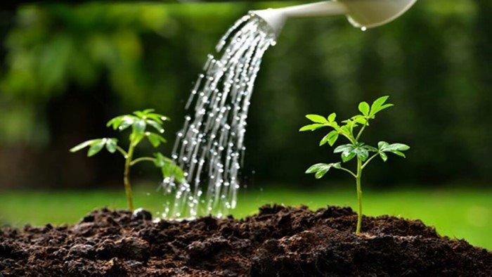 Эксперимент Ван Гельмонта: растения не получают биомассу из почвы для своего роста, откуда они ее берут?