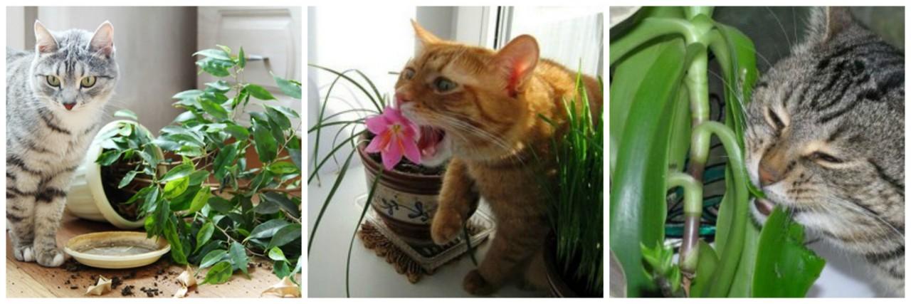 кошка есть цветы