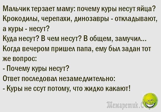 Куры Анекдот