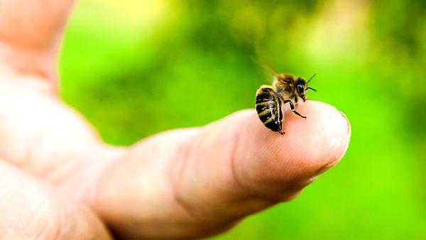 Укусы жалящих насекомых: защ…