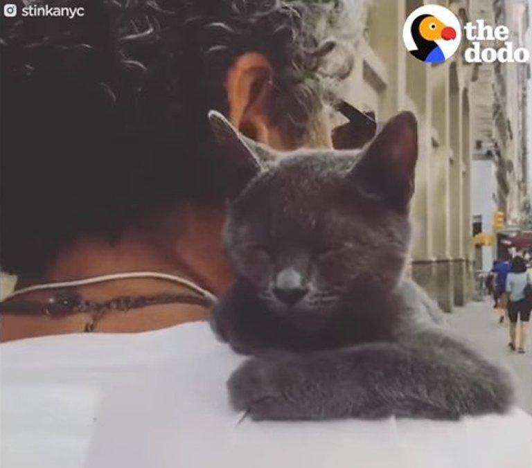 Этот кот живет собачьей жизнью: к этому у него талант