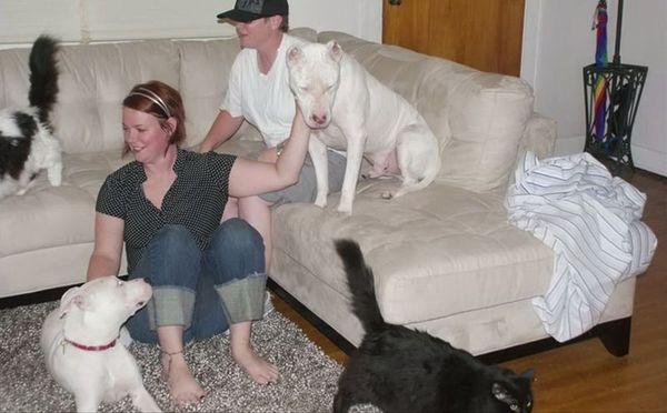 Этого пса считали агрессивным и хотели усыпить. К счастью, судьба послала ему второй шанс собака, питбуль, спасение, жестокость, длиннопост
