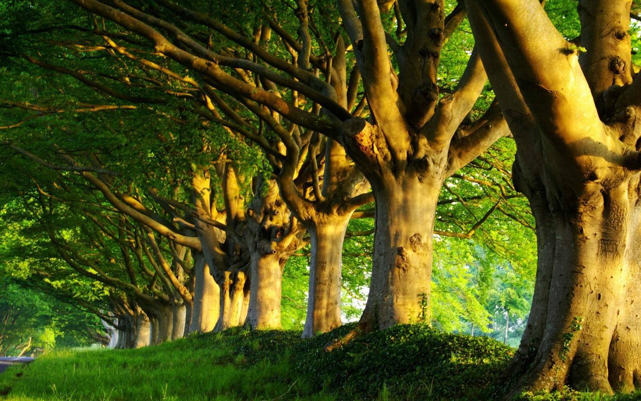 Секреты могущественных деревьев.