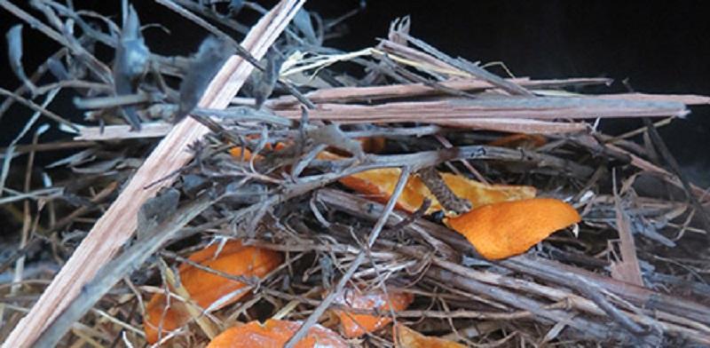кожура апельсина для растопки