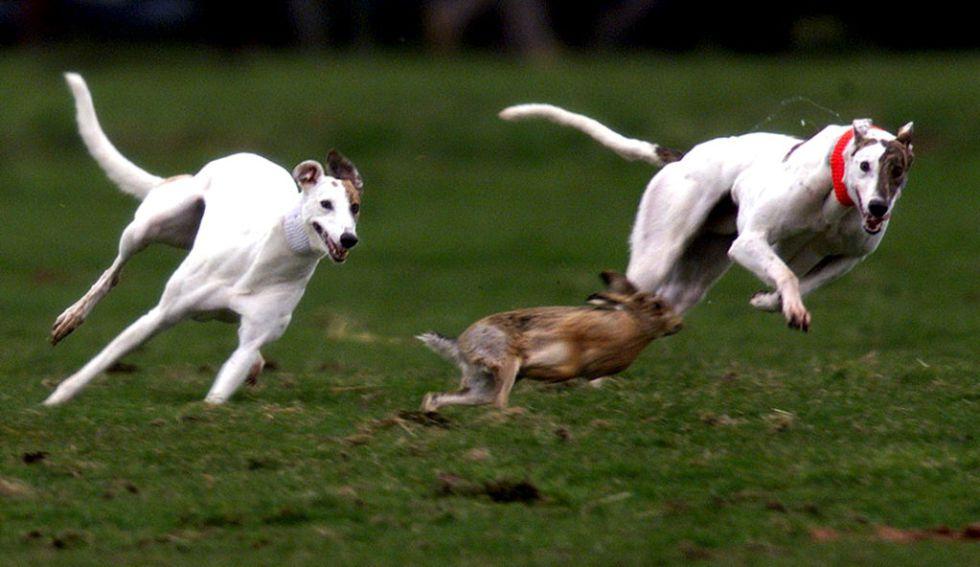Убийство животных – дань традициям?