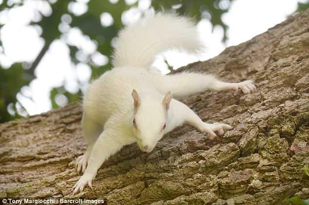 Редкую белую белочку засняли…