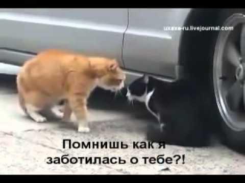 МУЖ И ЖЕНА :))