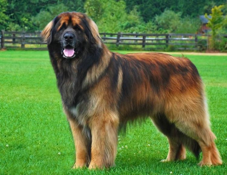 Mалоизвестные породы собак