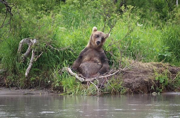 В заповеднике обнаружен медведь-Будда