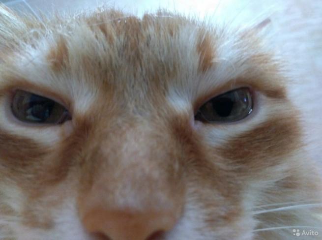 Для компенсации ущерба: Житель Кемерова продает кота за 200 тысяч рублей