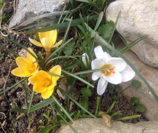 Весенние цветы и камни…