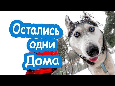 Примите поздравление я нашкодил Приколы про животных собаки нашкодили Собака дома разгром в квартире