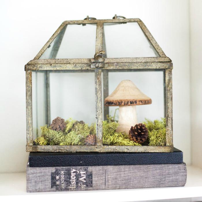 Небольшой оазис в маленькой теплице из стекла.