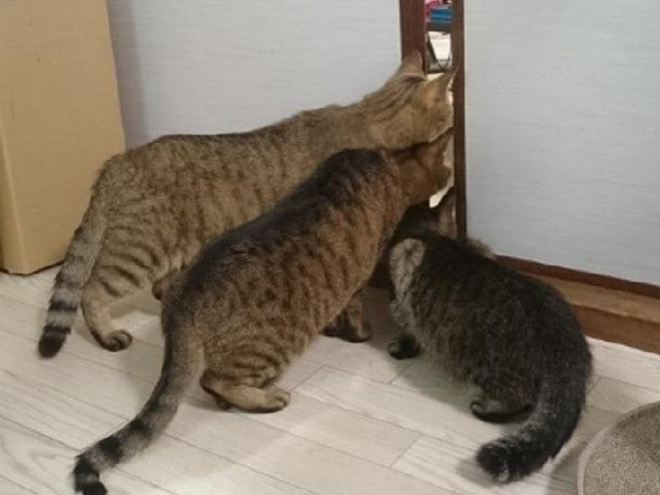 Примеры того, как выглядит настоящее кошачье любопытство
