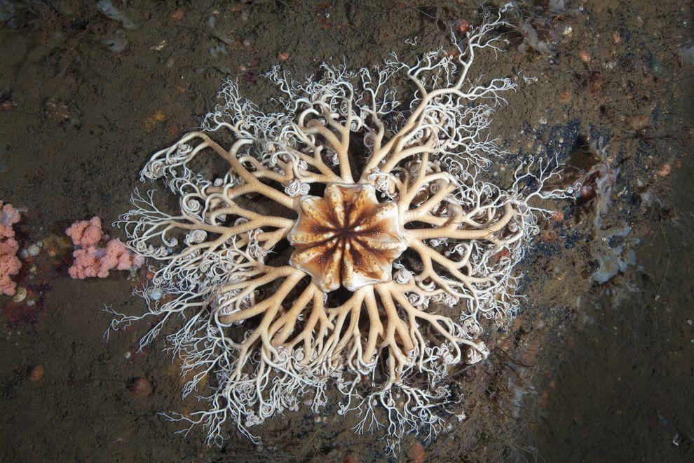 Semyonov01 Морские организмы на фотографиях Александра Семёнова