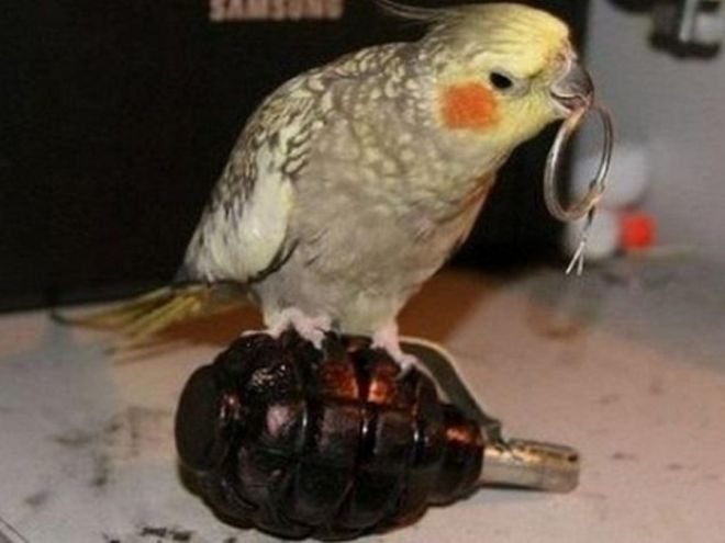 вылетит птичка