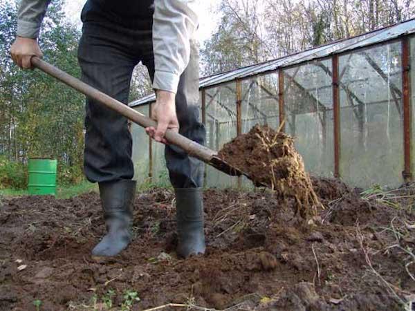 Что делать, если почва как губка