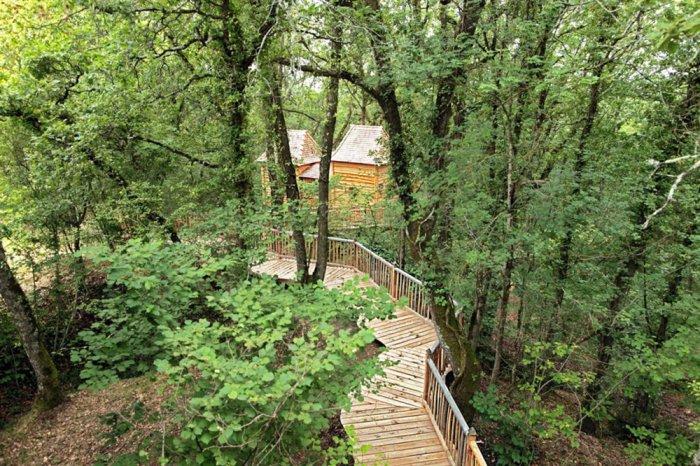 Шато «Hautefort Treehouse» вокруг столетнего дуба