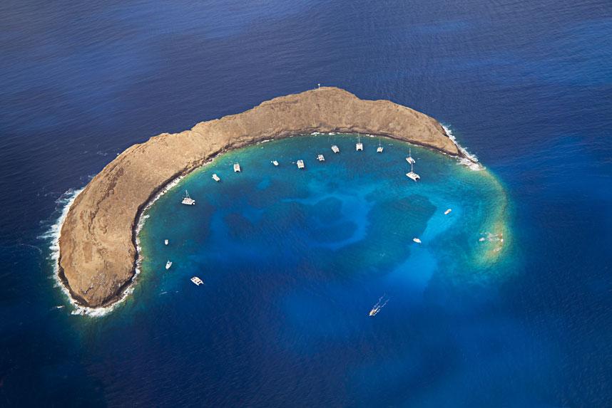 1552 Жизнь в океане   подводные фотографии Дэвида Флитэма