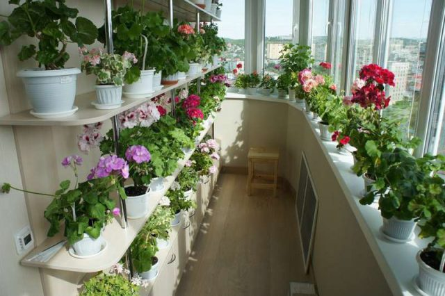 Шикарный цветник дома — это реальность! секрет – в подкормке! топ 9 хитростей…