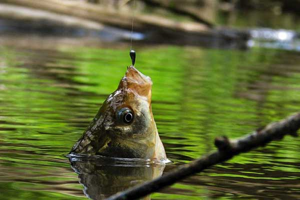 ловля карпа весной на озере в стоячей воде