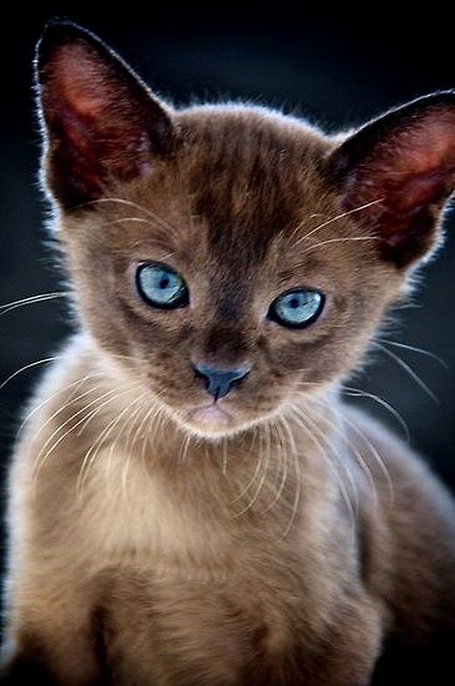 6. Голубые глаза Любовь, дети, животные