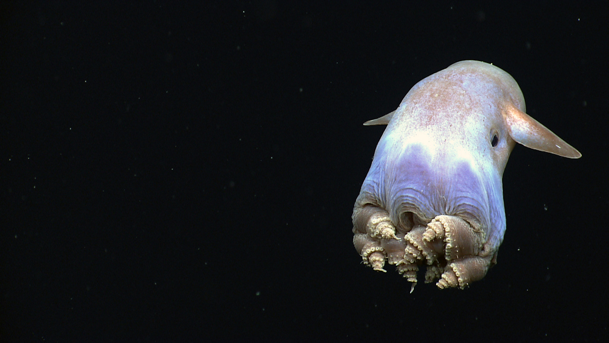 ������������. (NOAA Ocean Explorer)