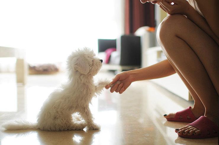 6 аргументов в пользу того, чтобы завести домашнего питомца