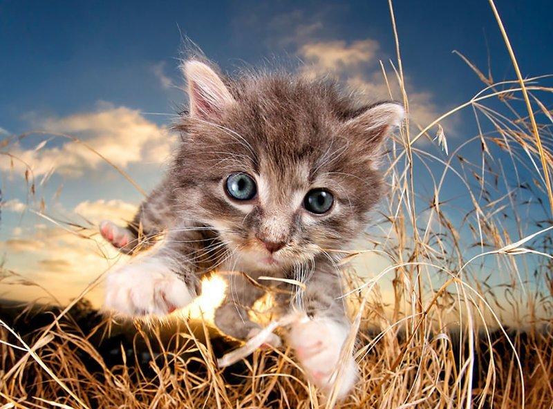 Коты, у которых была всего с…